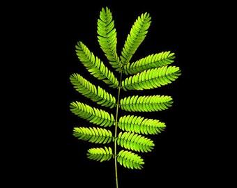 Nature Photography, Garden Fern, Fine Art Photograph, Botanical Art, Garden Decor, Spring Green Home Decor, Wall Art, Landscape