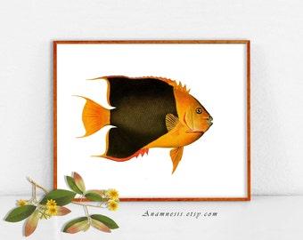 Image numérique de poissons tropicaux colorés 2 - téléchargement - illustration de gros poissons antique imprimable réorganisée pour transfert d'image - totes, oreillers