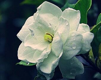 Exotic Perfume, Emiko Natural Perfume oil, Tropical Gardenia, Mandarin, Japanese Rose, Apricot, Coconut, roll on Perfume 3 ml cruelty free