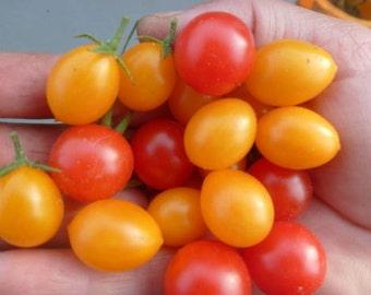 Wild Tomato Heilroom Seeds, Mini tomato,  20+ Seeds