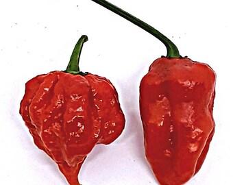 Carolina Reaper VS. Fitalii Jigsaw:  FRESH (super hot) peppers- 1 pod of each variety.