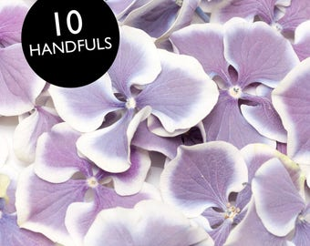 Freeze dried Purple and white hydrangea  petals for wedding confetti / decoration
