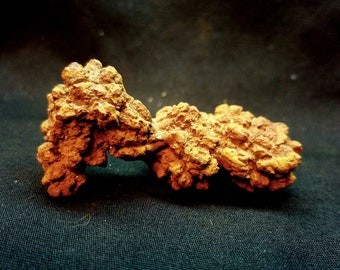 Coprolite, Fossilized Dino poo, dinosaur dung  (KP8)