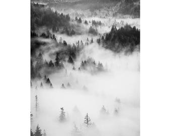 Black and White Vintage Forest Photography, Forest Print, Fog Photography, Fog Print, Aerial Forest Photography