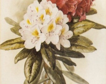 Rhododendron - Cross stitch pattern pdf format