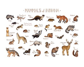 Indiana Mammals Field Guide Art Print  / Animals of Indiana / Watercolor Painting / Wall Art / Nature Print / Wildlife Poster