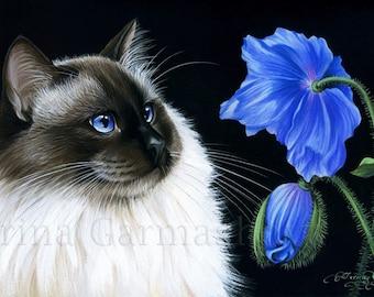 Ragdoll Cat Print Blue Poppy by Irina Garmashova