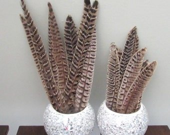 Pheasant Feathers (Hen Tail Feathers)