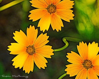 Flower Photograph, Nature Photography, Nature Wall Art, Wildflower Art, Flower Art Print, Flower Artwork, Yellow, Orange, Wildflower Print