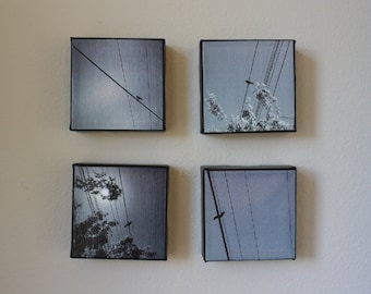 SET OF FOUR: Bird on Wire canvases
