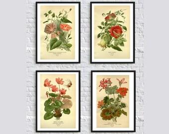 Vintage botanical print illustration flowers plants vintage illustration home decor wall art print SET of 4 geranium cyclamen red green