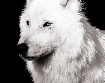 Wolf Wall Art - Wildlife Home Decor  - Monochrome Animal Photo -  Fine Art  Black and White Photography