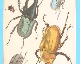 Antique Beetles (including Rhinoceros Beetles) illustration