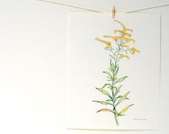 Flower Print - Seaside Goldenrod - 1989 Vintage Page 10 x 8