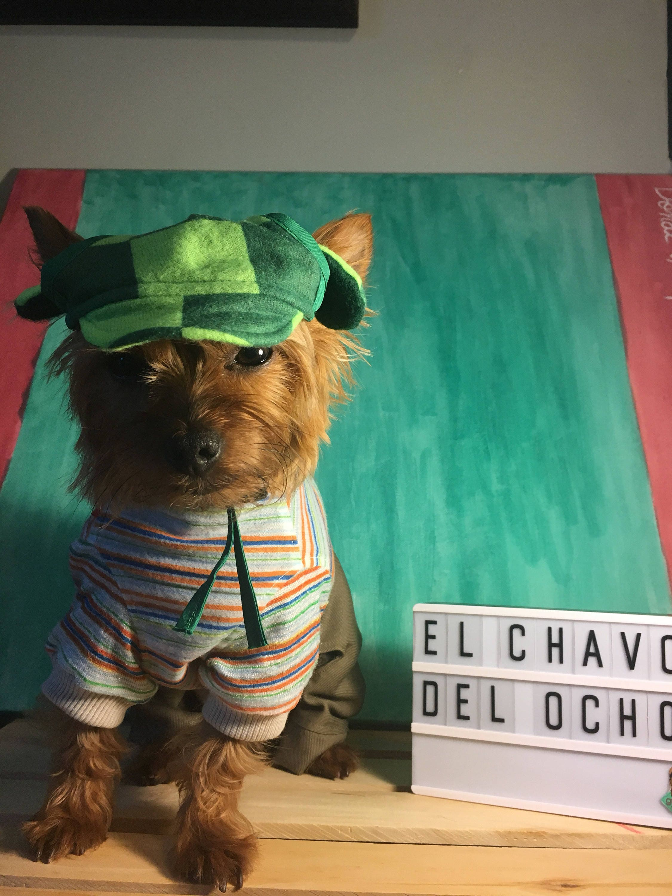 El Chavo del Ocho Dog costume/ Mexican outfit for dog/ Mexican