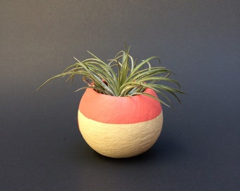 Air Plant Pod - pink top