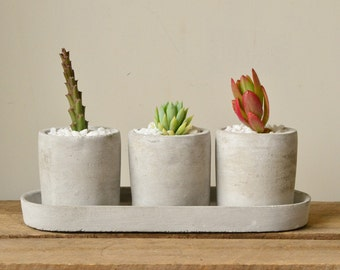 Set of Three Mini Cylinder Concrete Planters with Plate