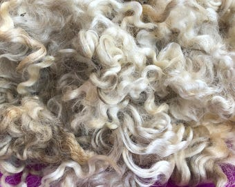 Raw Leicester Longwool yearling