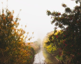 Fine Art Landscape Photography, Water Reflections, Fall, Misty Fog, Trees, Peaceful Art, Brown Wall Art, Brown Home Decor, Large Prints