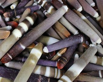 "Multipack 3""-4.5"" WHOLE Sea Urchin Spines bulk wholesale shell sea life nautical Hawaii seashell URCH04"