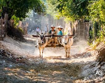 Oxon et panier en Myanmar impression photographique ou de la toile pour mur