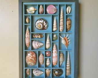 Mixed media seashell art, collage, assemblage, sculptural relief, with a beautiful seashell collection in an reclaimed printer's type box.