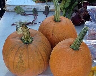 Sugar Pie Heirloom Pumpkin Seeds Non-GMO Naturally Grown Open Pollinated Gardening