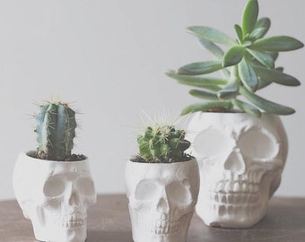Plaster Skull Planter - Small