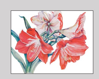 Ringing with Pride - Print of bold, red Amaryllis