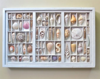 Mixed media seashell art, seashell collage, seashell assemblage, a composition of colorful seashells in a re claimed printers type drawer.