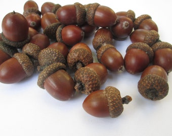 30 middle acorn for decoration. Natural acorns from the forest. Lacquered acorns for different decorations.