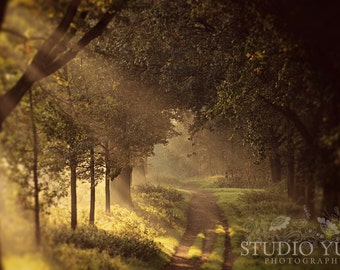 Forest Photography, Golden Autumn, Dreamscape, Woodland, Path, Magical, Trees, Fairytale Forest, Enchanted, Fairytale - To the Shire