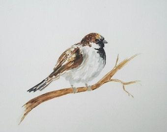Original watercolour painting of Sparrow, watercolour bird painting