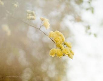 Gelbe Rose Fotografie, gelbe Rose Bild, Rose-Wand-Kunst