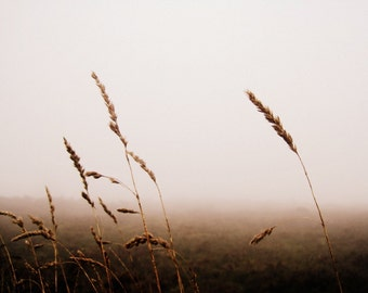 Landscape Photography - Grasses in the Mist Print - Irish Scenery - Misty, Moody Home Decor - 8x10