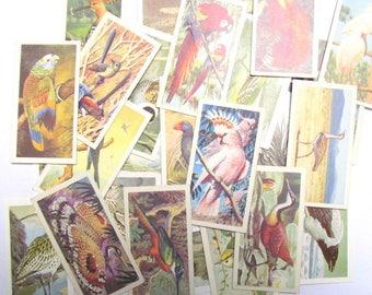 Vintage bird collector cards: pack of 30 Brooke Bond Tea collector cards. Paper ephemera for craft, scrapbooks, journaling, collage. OT638