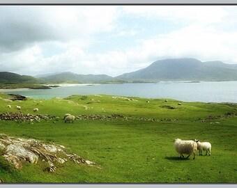 Ireland Photo Card, Sheep Grazing on an Irish Beach, St. Patrick's Day Card