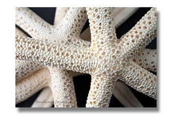 Starfish Collection Beachy Photography, Seaside Nautical Decor, Sea Still Life, Summer Vacation Beach House, Natural Cream Tan Cottage Art