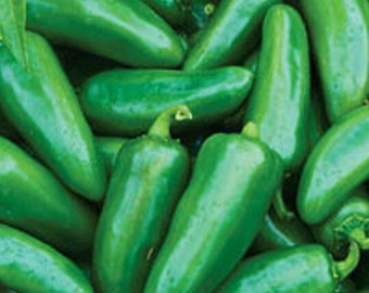 Seeds - Hot Pepper Jalapeno Early, 25 ct.