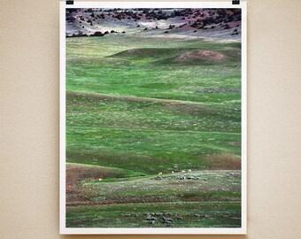 BOULDER ANTELOPE - 8x10 Signed Fine Art Photograph