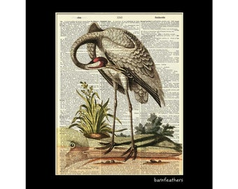 Vintage WHOOPING CRANE Illustration printed on an Old Dictionary Page - Book Page Art print No.P345