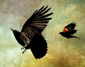 Crow Art, Blackbird Print, Bird Wall Art, Bird Print, Crow Print, Wildlife Art, Nature Photography, Nature Art, Nature Prints, Black Bird