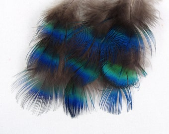 Blue Peacock feathers qty10  PC6 craft feathers natural