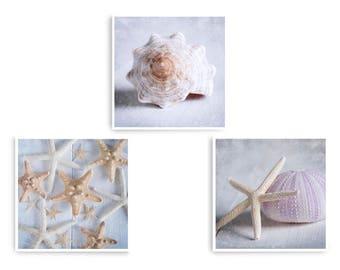 Beach Decor, Sea Shell Prints, Coastal Decor, Set of 3 Prints, Bathroom Wall Art, Beach House Decor,  Sea Shell Wall Art, Nautical Art