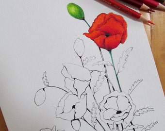 Poppy Flowers to Color, Coloring for Adults, Printable Coloring Page, Flowers, Poppies, Hand Drawn,  Print Yourself, Instant Download