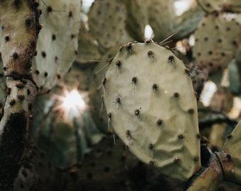 Prickly Pear Photo Print