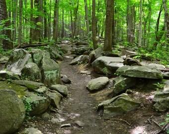 Rainbow Falls Trail, Hiking, Trees, Rocks, Green