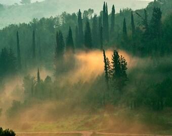 Landscape Photography, Wall Decor, Nature, Israel, Fine Art Photograph, Morning, Sunrise, Tree, Light, Forest