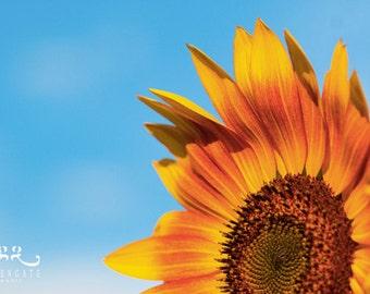 Sunflower Photo print - flower photography, botanical, blue sky, gifts for her, farmhouse decor, housewarming gift, kitchen wall art