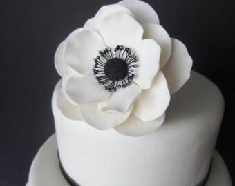 sugar anemone large white
